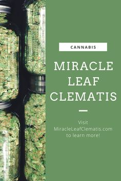 Get your #medical #marijuanacard by visiting #MiracleLeaf in West Palm Beach, FL and scheduling an appointment with one of their #medicalmarijuana doctors. Perfect Image, Perfect Photo, Love Photos, Cool Pictures, West Palm Beach, Medical Marijuana, Clematis, Doctors, City Photo