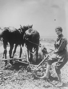A member of the Women's Land Army of America plows a field, with a plow drawn by two horses, California, 1917.