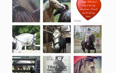 Want more horses in your Instagram feed? Follow these accounts for instant equine improvement and inspiration, by Julia Arnold.
