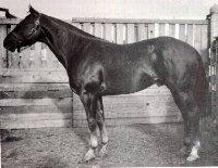 Foundation AQHA--Wimpy P-1 1937-1959  Wimpy a double-bred Old Sorrel achieved everlasting recognition in the world of Quarter Horses by being awarded the number 1 in the AQHA
