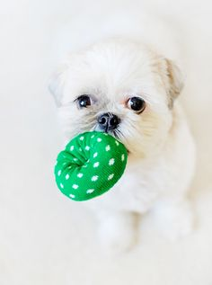 Doggy Donut Toys! Make your own DIY Holiday Donut toys for your dog in 5 minutes.