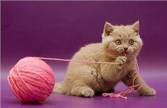 CoolPetZ | Social Pet Network Kedilerde Yabancı Cisim Yutma Belirtileri ve Alınabilecek Önlemler! #kedi #CoolPetZ