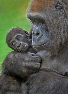 #Motherhood: All love begins and ends there. - Robert Browning. Photo by Ion Moe.