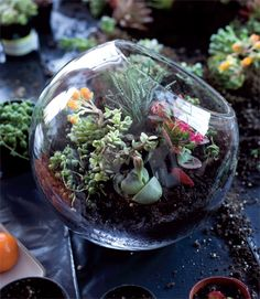 Succulent Terrarium from SIDE BY SIDE