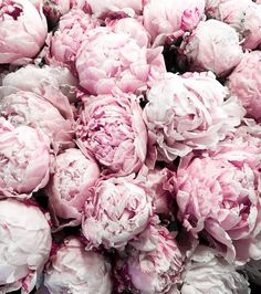blush pink peonies from the farmers market in Seattle