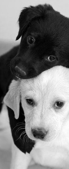 Black and white puppy love