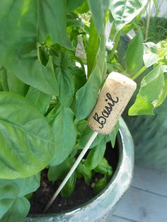 wine cork herb labels with wood skewers.