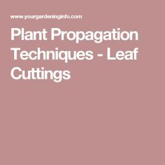 Plant Propagation Techniques - Leaf Cuttings
