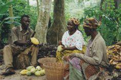 bewerken van cacaoboon