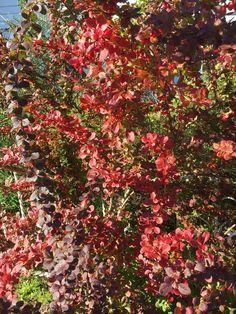 It´s autumn in my garden Margeritten - by Inger Johanne 9/27/15