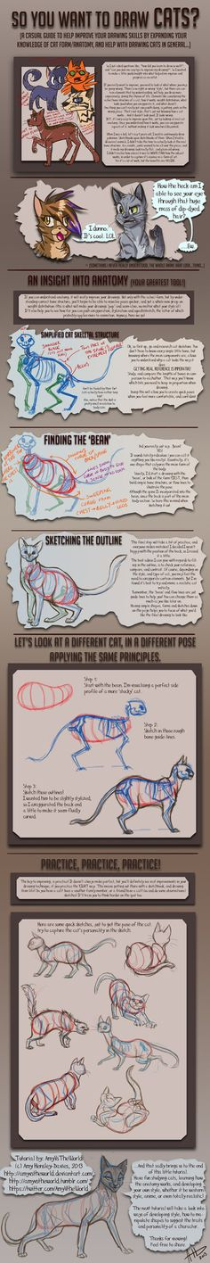 So you want to draw Cats? TUTORIAL by AmyVsTheWorld on DeviantArt