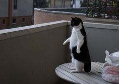 The cat who thought he was a penguin.