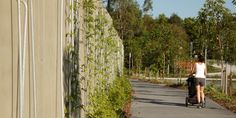 Noosa Transit Centre, Queensland Australia. Landscape designed by Guymer Bailey Landscape. Scott Burrows Photography.