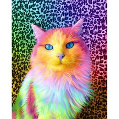 Ramzy Masri is a talented Brooklyn-based graphic designer who uses rainbow colors as a major inspiration for his artwork. Tier Wallpaper, Animal Wallpaper, I Love Cats, Cute Cats, Animals And Pets, Funny Animals, Trippy Cat, Unicorn Cat, Colorful Animals