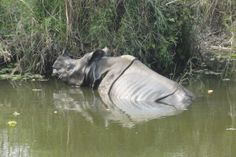 Proposed rail and road projects could devastate Nepal's tigers and rhinos