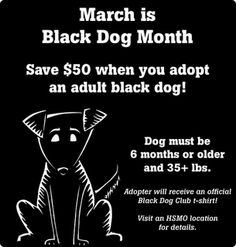 Black Dog (Adoption) Month at the Humane Society of Missouri.  Adopt a black dog!