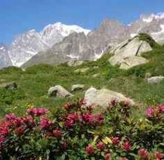GIARDINO BOTANICO ALPINO SAUSSUREA, Courmayeur (Valle d'Aosta)