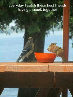 Best Friends Snacking Together #bird #squirrel