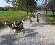 Bildergebnis für gut aiderbichl bilder Animals, France, Bayern, Pictures, Animales, Animaux, Animal, Animais