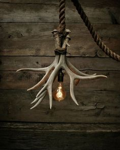 Cabin Lit Chandelier: upcycled shed antlers by Moon Stone Fox Moon Stone Fox, an upcycling shop on Etsy, created this unique lamp called 'Cabin Lit Chandelier'. Its made out of 3 Grade A shed antlers. Deer Horns Decor, Shed Antlers, Deer Decor, Deer Hunting Decor, Antler Lights, Antler Art, Deer Antler Crafts, Cabin Lighting, Lighting Ideas