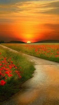 peaceful path on sunset
