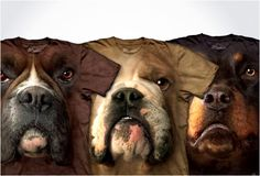 HYPER REALISTIC DOG T-SHIRTS   BY THE MOUNTAIN