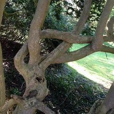 french braided tree <3 French Braid, Braids, Walls, Trees, Plants, Art, Bang Braids, Art Background, Braid Hairstyles