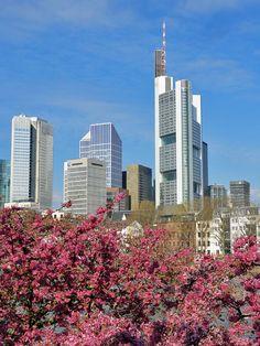 http://www.stadtkindfrankfurt.de/wp-content/uploads/2015/04/frankfurt-fotos-fruehling-mit-skyline.jpg