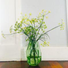 Blømster van de venkel!   #moestuin #gardening #bouquet