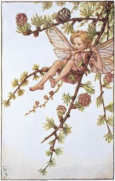 Illustration for the Larch Fairy from Flower Fairies of the Spring. A boy fairy sits in the bough of a larch tree.     Author / Illustrator  Cicely Mary Barker