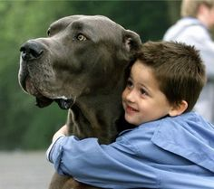 Giant George and his master;   Blue Great Dane