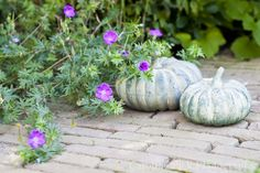 Tuinreportage in Waddinxveen voor BuitenBuiten Hoveniers Pumpkin, Vegetables, Food, Gourd, Meal, Pumpkins, Eten, Vegetable Recipes, Meals