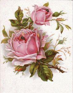 beautiful rose print