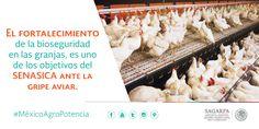 El fortalecimiento de la bioseguridad en las granjas, es uno de los objetivos del SENASICA ante la gripe aviar.  SAGARPA SAGARPAMX #MéxicoAgroPotencia