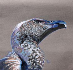 Water colour Bird Painting. Cape Griffin Valture Watercolor Ideas, Watercolor Bird, Bird Paintings, Vulture, Cape, Flora, Fine Art, Colour, Paintings Of Birds