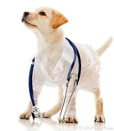 Dog Dressed As A Vet - Download From Over 31 Million High Quality Stock Photos, Images, Vectors. Sign up for FREE today. Image: 26690242