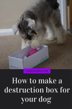 Great enrichment idea for your dog. DIY puzzle games to let your dog use all their senses to find hidden treats. #canineenrichment #braingamesfordogs #dogplayideas