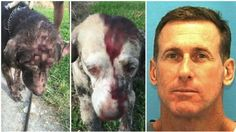 In Lakeland, Florida authorities say a man who attacked two dogs with a sledgehammer. Polk County Sheriff's Office reported, Tad Whitworth, 49 of Woodbine Avenu...
