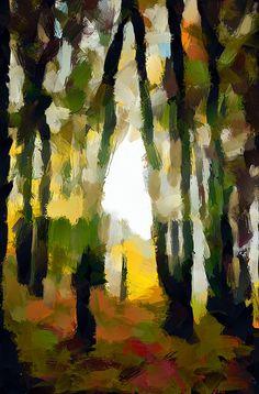 YSP 12_4056287883_o for DAP_DAP_Deep Forest