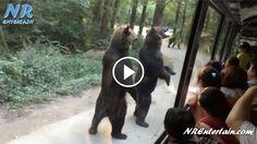 na-china-os-ursos-parecem-pessoas