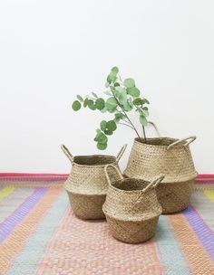 SALE 20% / Seagrass Basket for Planter and Spray in 3 Sizes / Panier Boule Natural Belly Storage Org