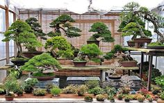 Some beautiful bonsai from garden of Shinji Suzuki