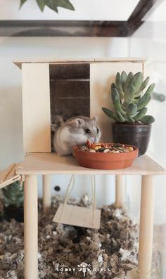 We DIYed our hamster a beautiful new home! Click through to learn more!We DIYed our hamster a beautiful new home! Dwarf Hamster Toys, Hamster Tank, Hamster Bin Cage, Hamster Habitat, Hamster Life, Syrian Hamster, Hamster Homes, Hamster Stuff, Baby Hamster