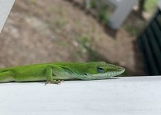Our tiny, scaly friend wants you to Go Green! ♻️ Photo by Alexandra Wisner Forest Habitat, Bald Head Island, Green Photo, Go Green, Wildlife Photography, Habitats, To Go, Beach, Nature