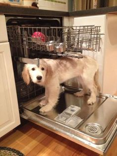 But I'M the dishwasher.