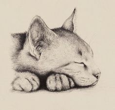 Sleeping Cat By Terry Austen