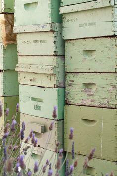 A Chef's Secret Roof Garden: Honey bees at The Fairmont San Francisco!