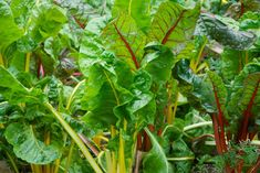 JetBlue Opens 'Farm-to-Air' Food Garden at JFK International Airport - Garden Collage Magazine