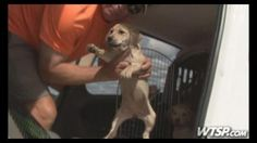 This is an amazing rescue story and a huge accomplishment for the rescuers at Pilots N Paws and all the volunteers that helped so many animals from Hinesville, GA. 50 pilots donated their time and fuel to fly from all over the area to pick up the dogs in Hinesville and fly to cities like Tampa with no-kill facilities. Article. CLICK. --Posted to DESERT HEARTS Animal Compassion -  Phoenix, Arizona -- 10/12/2013 https://www.facebook.com/desertheartsphoenix