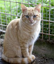 Gato Lusco. Lo apartaron de su madre al poco de nacer. Animals, Kittens For Adoption, Foot Prints, Gatos, Animales, Animaux, Animal, Animais